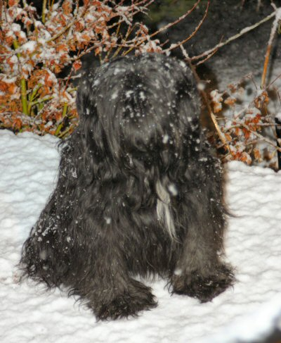 Rhoni in the snow